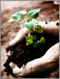 Plant - Predictions